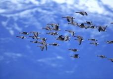 鸟类百科0274
