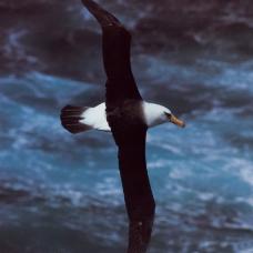 鸟类百科0197