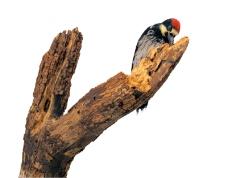 鸟类百科0028