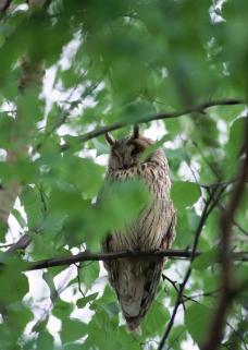 鸟类百科0061