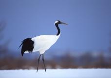 鸟类百科0191