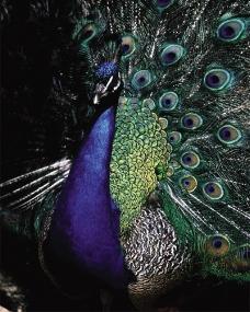 鸟类百科0097