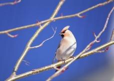 鸟类百科0163