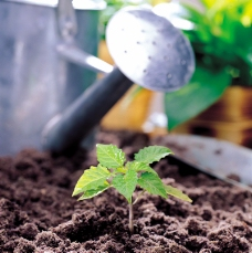 植物的力量0036