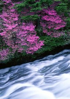 溪流水源0487